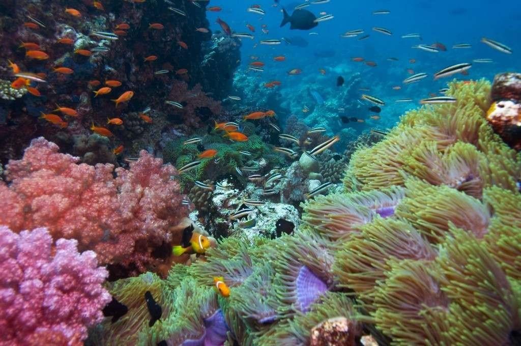 Snorkeling Boracay