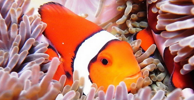 Scuba Diving Boracay Activities