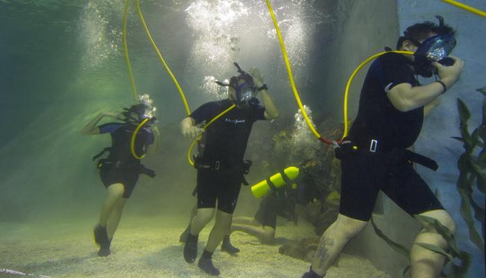 Aquarium Ocean Walk Boracay Activities